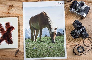 imageplakat-kufsteinerland-haflinger-3-1